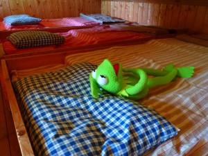frog-51868_640